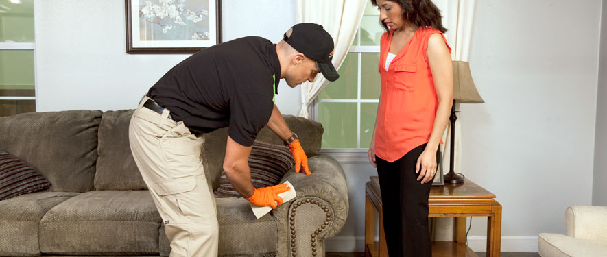 Jasper, AL carpet upholstery cleaning